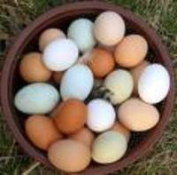 Eggs_mixed_colors_in_bowl._1