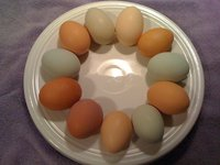 Eggs_colored_new_in_plate.