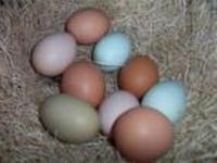 Eggs_mixed_in_bowl