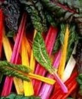 Swiss_chard_bright_lights